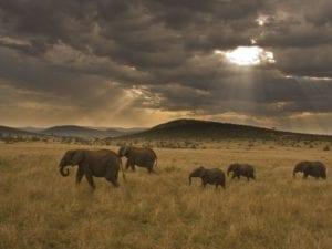 elephant-space-to-roam