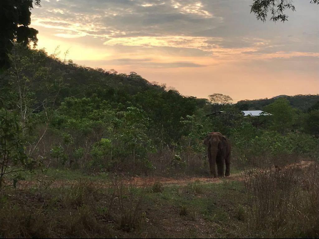 Guida - Elephant Diary Oct 23