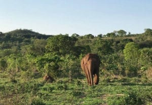 Maia - Elephant Diary Oct 28