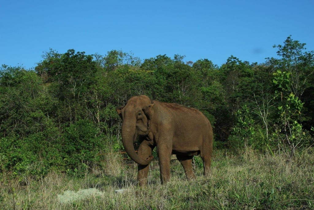 Guida - Elephant Diary October 30