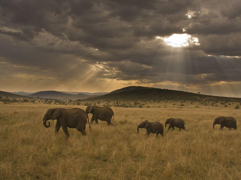 Elephants space to roam