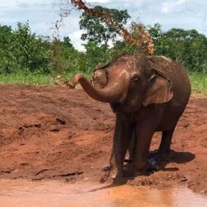 Muddy Maia