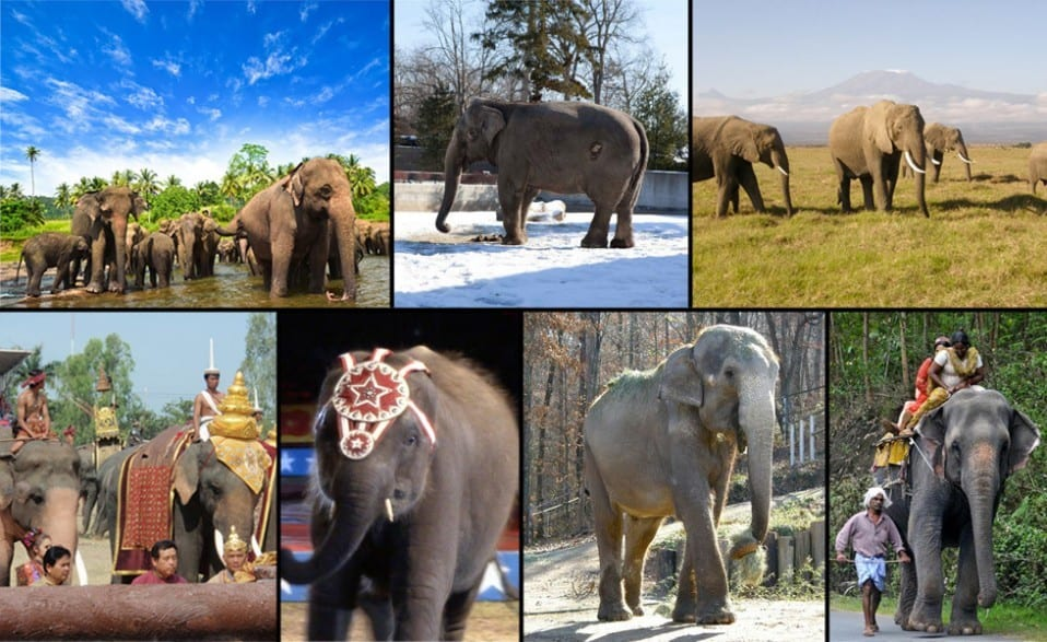 Every Elephant Matters slider picture