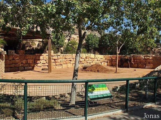 zoo elephant yard