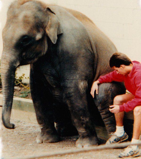 Elephant and human