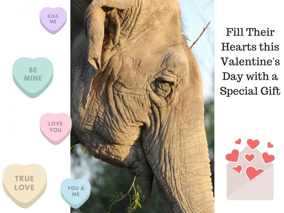 Fill Their Hearts this Valentine's Day with a Special Gift