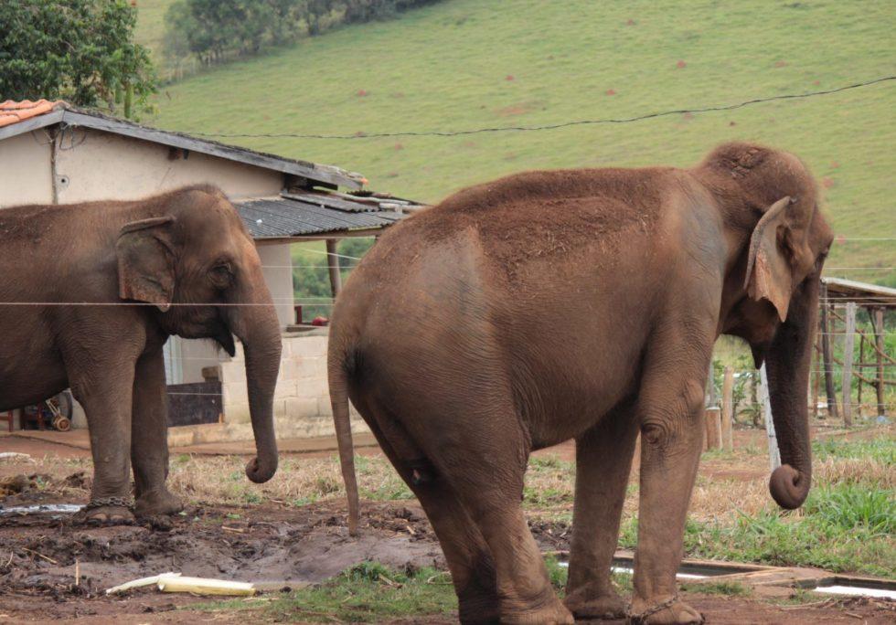 Maia and Guida on the circus farm