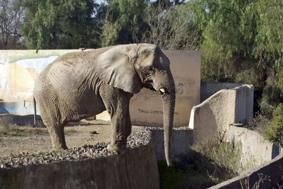 Kenya at the Mendoza Zoo
