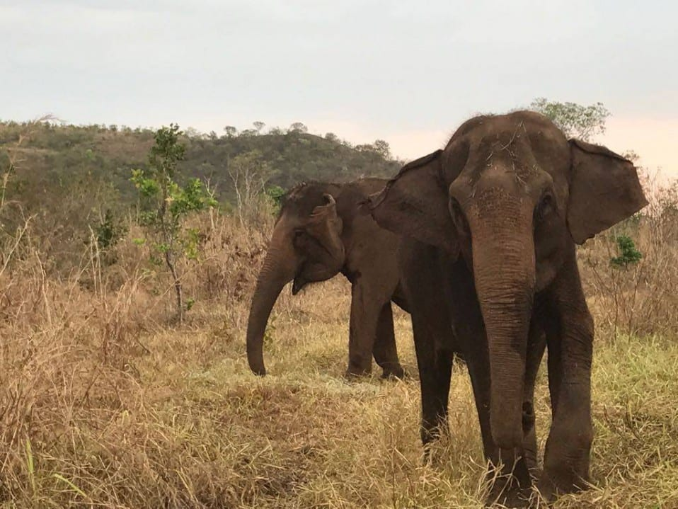 Maia and Guida in their new 40 acres
