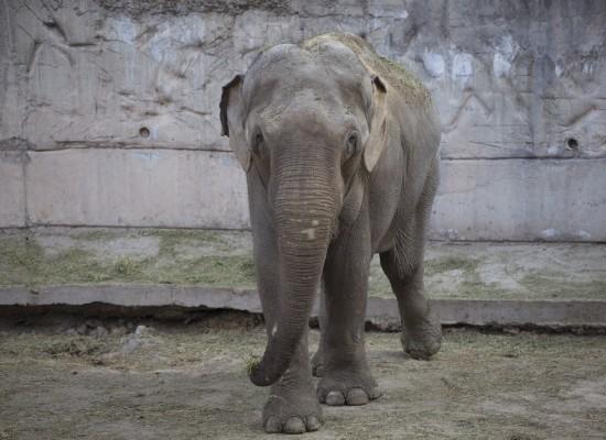 Tamy at the Mendoza Zoo