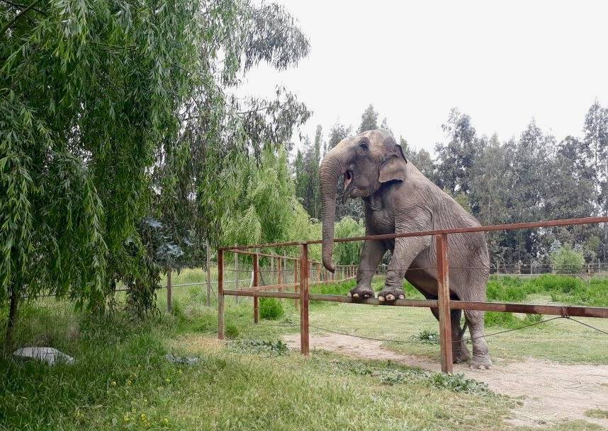 Ramba at the roadside zoo