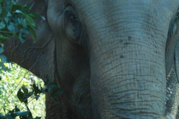 Guida - Elephant Diary - Oct 17