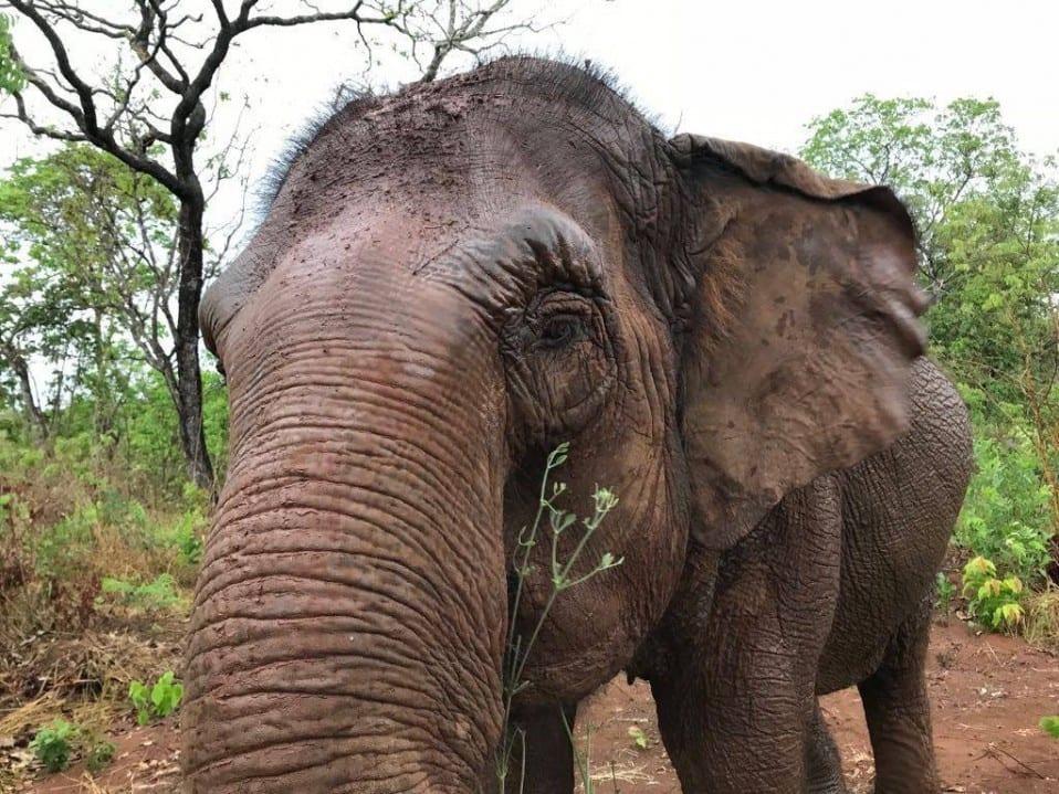 Maia - Elephant Diary Oct 22
