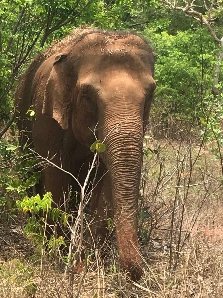 Maa - Elephant Diary Oct. 26