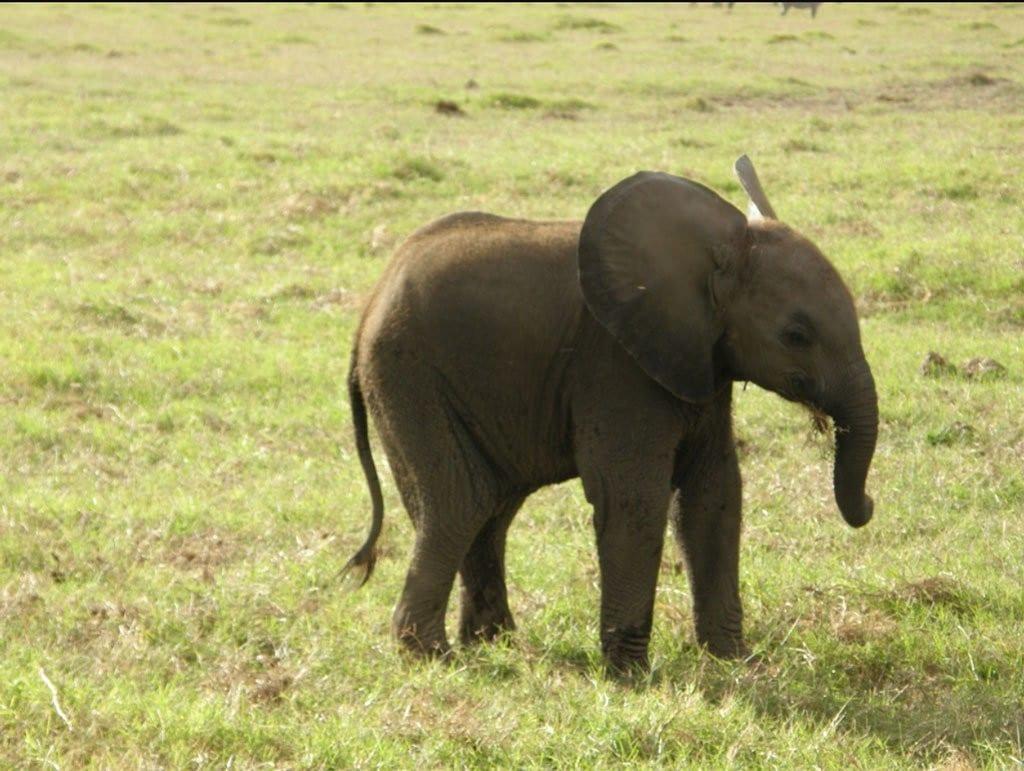 African Elephant nbsp» Inspire African Safaris