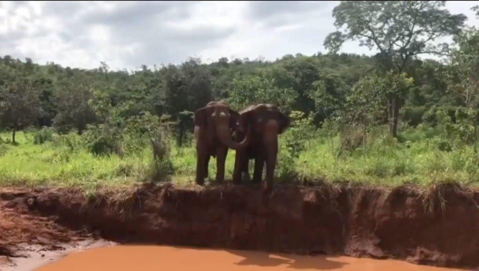 Maia and Guida at the pond