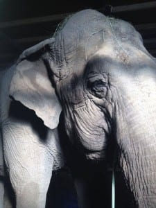 Ramba alone and waiting in Chile for sanctuary
