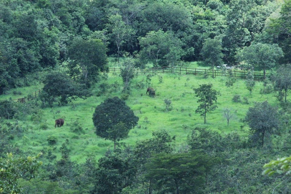 Watching Maia and Guida from afar