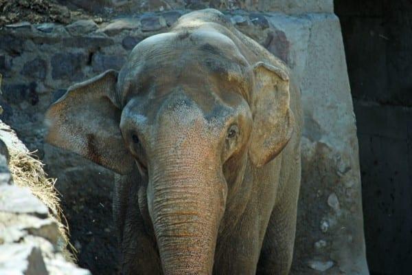 Pocha at the Mendoza Zoo