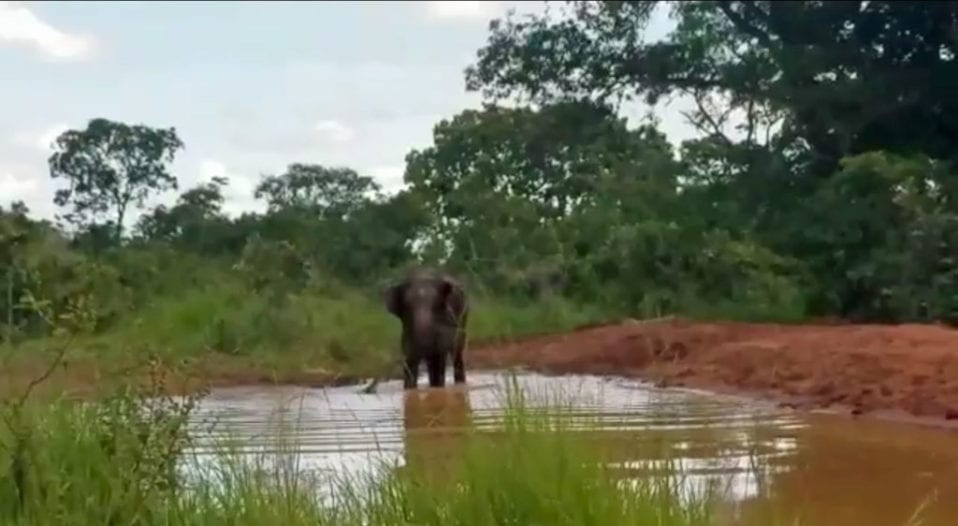 Guida in the pond with her palm