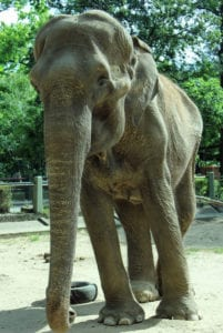 Pelusa at the La Plata Zoo