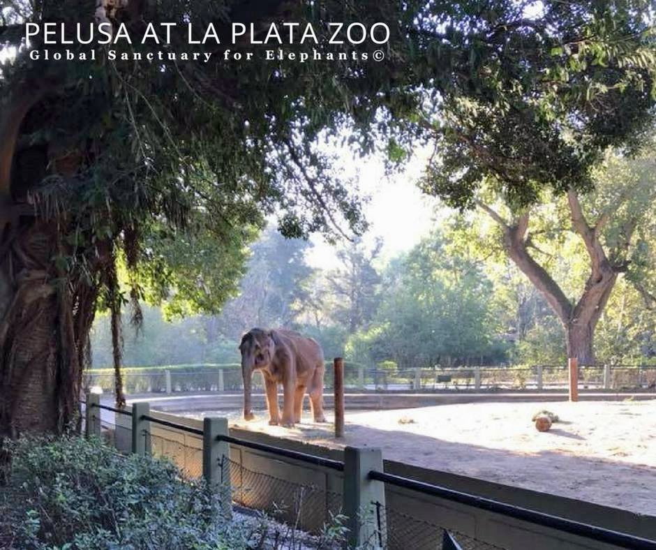 Pelusa at La Plata Zoo