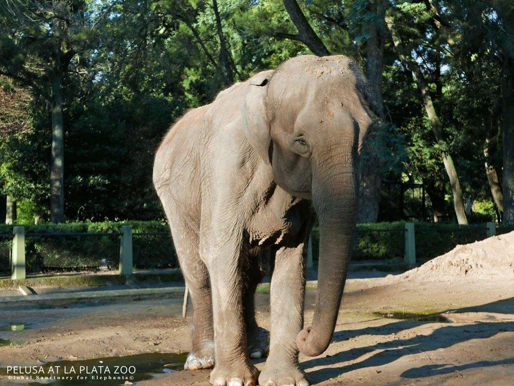 Pelusa at La Plata Zoo