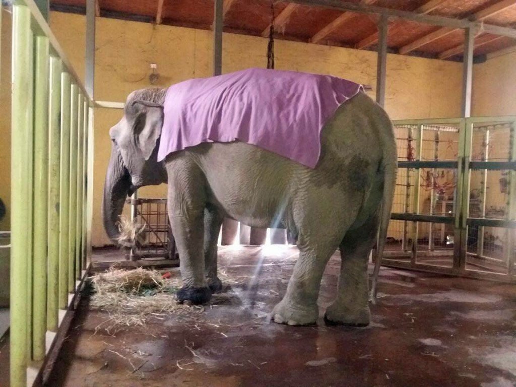 Ramba in Chile with her light blanket
