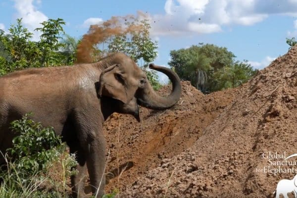 Guida and her dirt pile at sanctuary