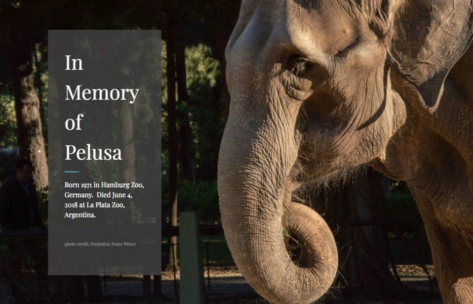 In Memory of Pelusa