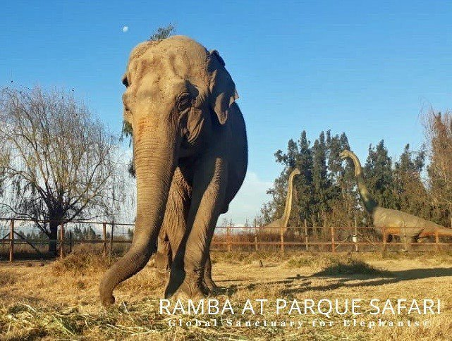 Ramba in Chile