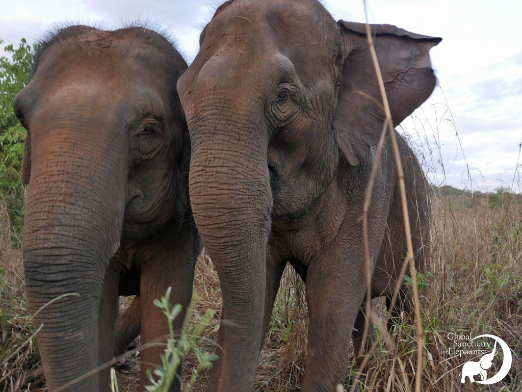 Maia and Guida