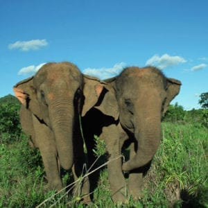 Elephant Wishlist