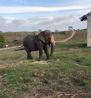 Rana at the hotel zoo
