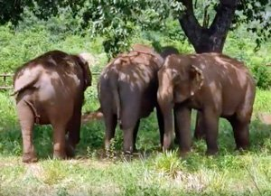 Rana, Maia and Guida