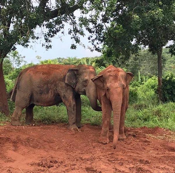 Rana and Maia
