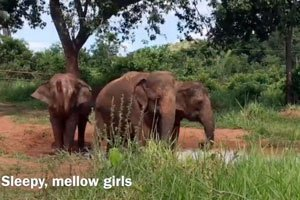 Maia, Guida and Rana