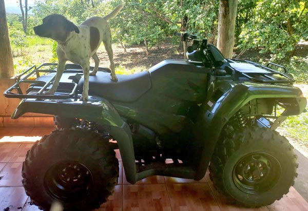 new 4-wheeler