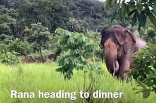 Rana heading to dinner