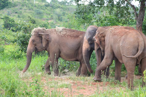 Maia, Rana and Guida