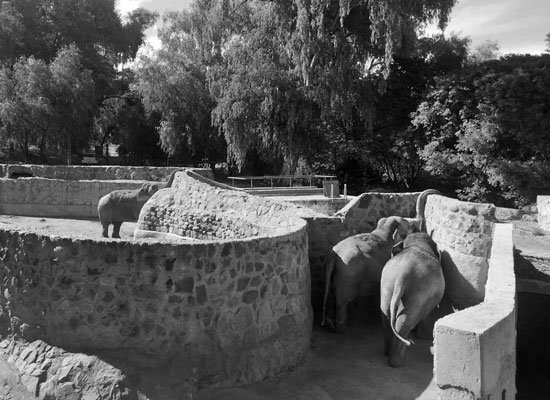 The Mendoza Asian elephants at Mendoza Zoo