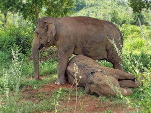 Guida and Maia
