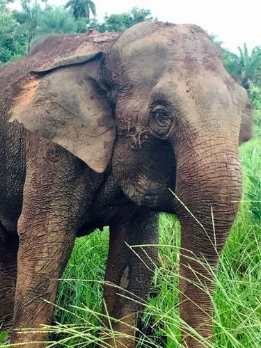 Guida covered in mud