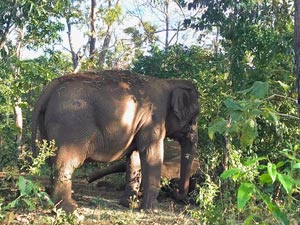 Maia standing over Guida