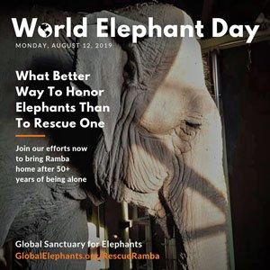 2019 World Elephant Day