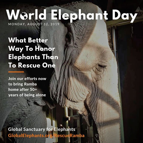 2019 World Elephant Day