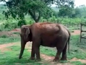 Ramba at sanctuary