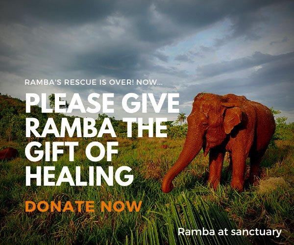 homepage Help ELephants Ramba
