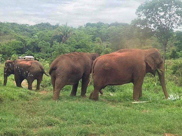 Maia, Rana and Ramba