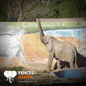 Kenya campaign